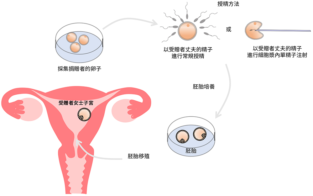 Egg Donation Flowchart